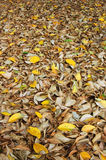 Leaf litter Royalty Free Stock Images