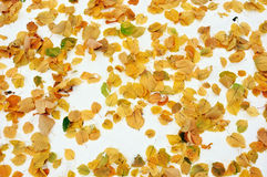 Leaf Litter Stock Photo