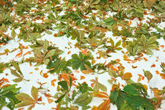 Leaf Litter Stock Image