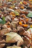 Leaf litter Royalty Free Stock Image