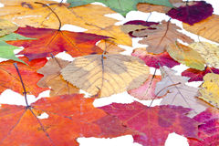 Leaf litter from deciduous leaves Royalty Free Stock Photography