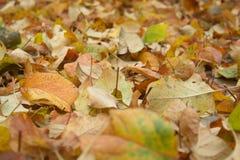 Leaf litter Stock Photos
