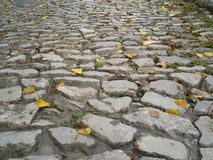 Leaf litter on the pavement. Autumn leaves on the road from a stone blocks Stock Photos