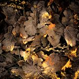 Leaf Litter and fall colors stock photo