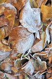 Leaf litter in winter Stock Image