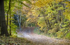 A leaf littered road runs through a green and golden forest in Michigan USA stock photography