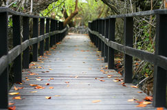 Leaf littered walkway Stock Image