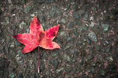 Leaf. Little red leaf on the street Stock Photo