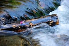 Leaf on a log Stock Photo