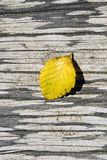 Leaf on log. Royalty Free Stock Photos