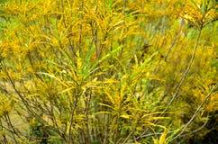 Leaf long flora of garden Stock Image