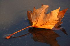 Leaf lying on wet asphalt Stock Image