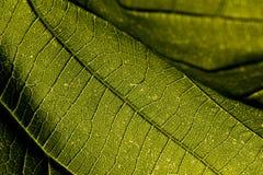 Leaf macro. Close up shot of a leaf Stock Photo