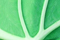 Leaf Macro Royalty Free Stock Images