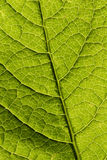 Leaf macro Stock Photos