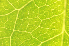 Leaf macro. A green leaf macro background Stock Images