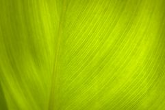 Leaf in macro Royalty Free Stock Image