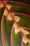 Leaf macro. Structure green and red Stock Photo