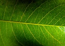 Leaf Macro Stock Image