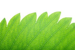 Leaf macro Royalty Free Stock Photos