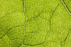 Leaf macro. Extreme close-up shot Royalty Free Stock Photography