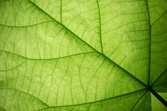 Leaf, macro Stock Image