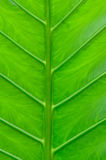 Leaf macro background Royalty Free Stock Image