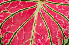 Leaf macro background. Stock Photo
