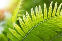 Leaf macro background. With sunshine Stock Photos