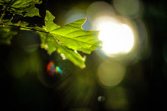 LEAF MACRO. A close shot about a leaf Stock Photo