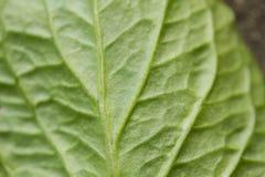 Leaf Macro Stock Images