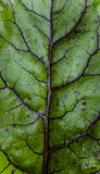 Leaf macro. Close up detail of a leaf macro Stock Photography