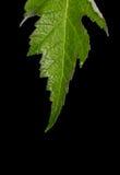 Leaf Macro Stock Photography