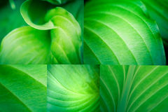 Leaf Macro Collage Royalty Free Stock Photography