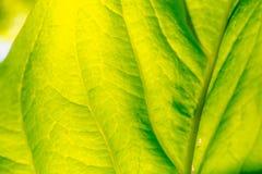 Leaf macro pattern of green. stock image