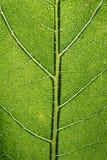 Leaf macro pattern of green Royalty Free Stock Image