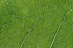 Leaf macro pattern of green Stock Photography