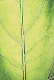 Leaf macro pattern of green. Vintage. Stock Photos