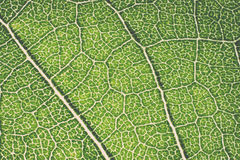 Leaf macro pattern of green. Vintage. Stock Photo