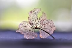 Leaf, Macro Photography, Close Up, Water Royalty Free Stock Images