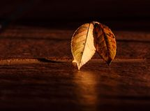 Leaf, Macro Photography, Wood, Still Life Photography Stock Photo