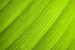 Leaf : macro schuin Stock Image