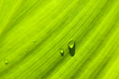 Leaf : macro schuin met druppels Stock Photos