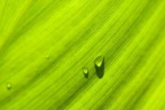 Leaf : macro schuin met druppels. Macro image of a leaf in back light. drops on leaf Stock Photos