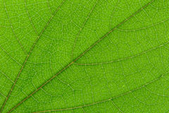 Leaf macro Stock Photo