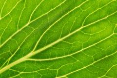 Leaf macro Stock Photo