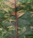 Leaf macro textures in details Royalty Free Stock Photo