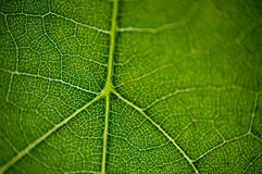 Leaf macro2 Royalty Free Stock Photography