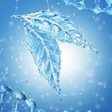 Leaf made of water splash on blue background Royalty Free Stock Image