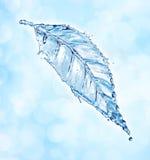 Leaf made of water splash Stock Images
